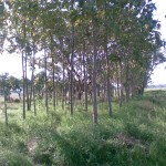 foto020